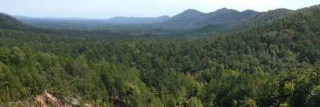 Ouachita Forest - Wind n Wood